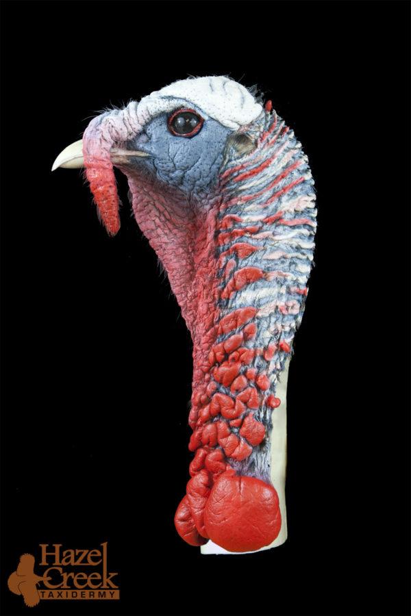 Painted Alert Turkey Head