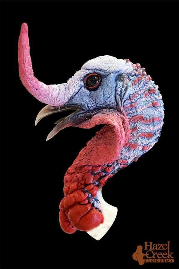 Fighting Painted Turkey Head