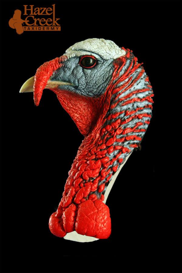 Painted Walking Turkey Head