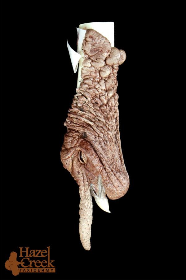 Hanging Turkey Head