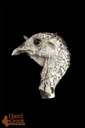 Unpainted Standing Turkey Head