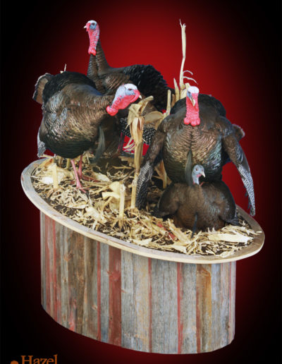 Gobbling Trio and Hen on Belly on Cornfield Scenery _ Barnboard