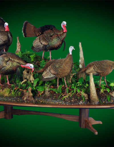Osceola Gobbler Trio and Hen Duo on Swamp Scenery _ Walnut