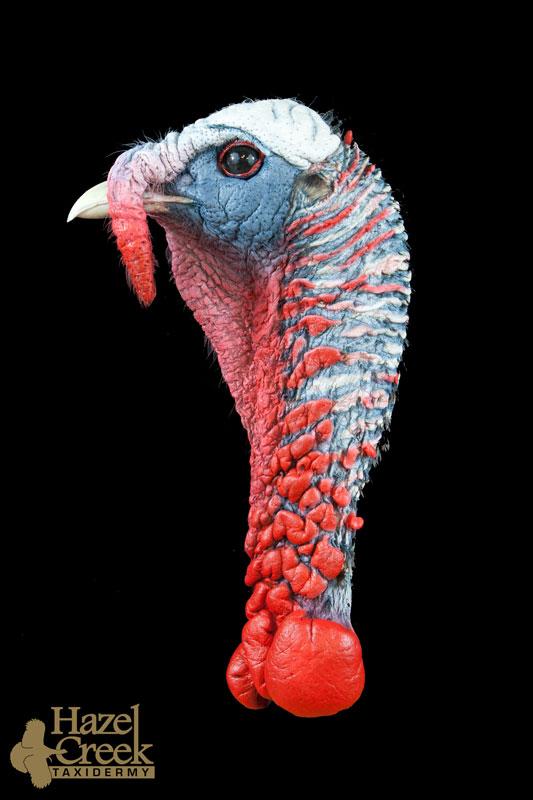 Alert Turkey Head
